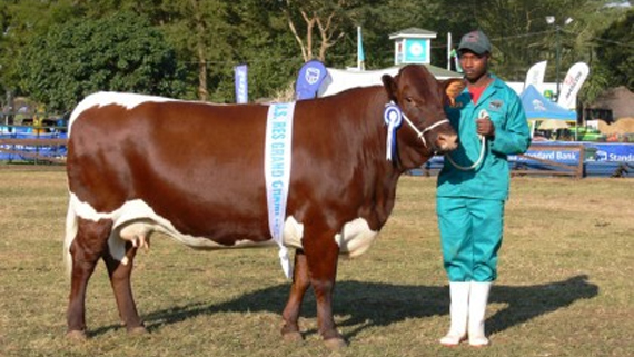 Stage set for Gweru Agric Show